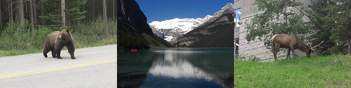 A bear, Lake Louise, and a deer.