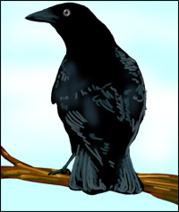 A crow stands on a tree branch.