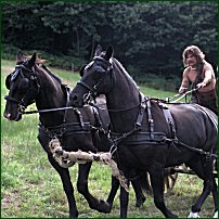 One of Boudicca's charioteers: a re-enactment.