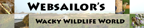 The Websailor's Wacky Wildlife World logo