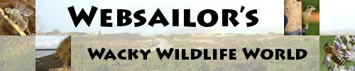 The Websailor's Wacky Wildlife World logo