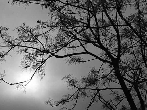 Winter Sun by Tavaron
